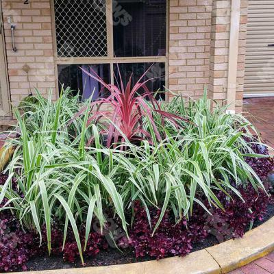 Mows Landscaping Dianella 5