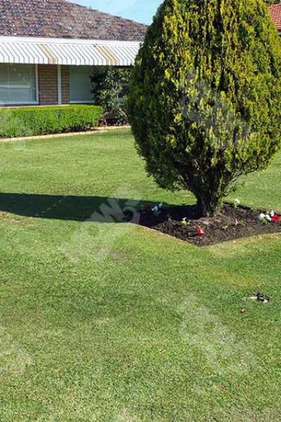 Mowing Edging And Hedging Dianella 2