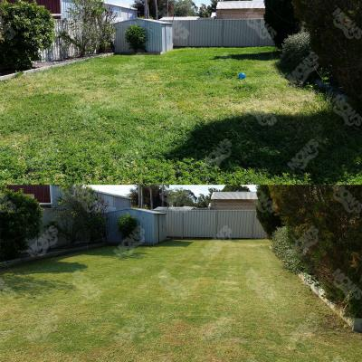 Mows Lawn Mowing Edging And Hedging Midvale 3